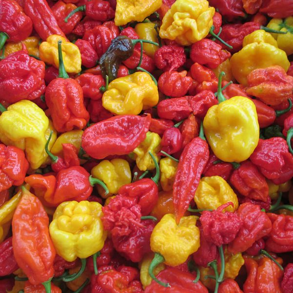 Chilli Seeds (Hottest Chillies Available)